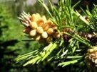 Cele-mai-bune-remedii-naturiste-impotriva-racelii